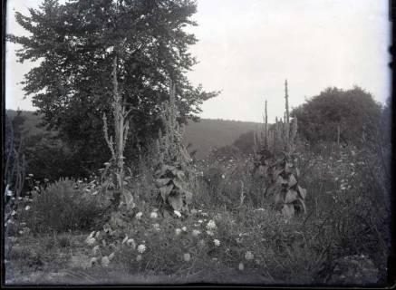 ARH NL Kageler 418, 1. Weltkrieg, Blütenreichtum in der Mauce-Schlucht, Frankreich, zwischen 1914/1918