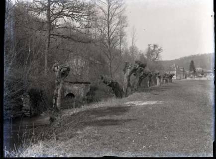 ARH NL Kageler 419, 1. Weltkrieg, Weidenbäume in der Mauce-Schlucht, Frankreich, zwischen 1914/1918