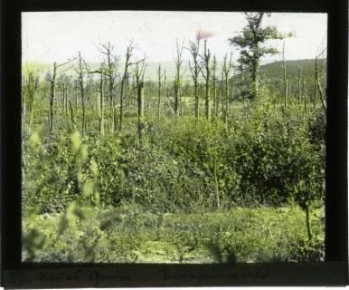 ARH NL Kageler 455, 1. Weltkrieg, Neues Grün, Priesterwald (Bois-le-Prêtre), Frankreich, zwischen 1914/1918