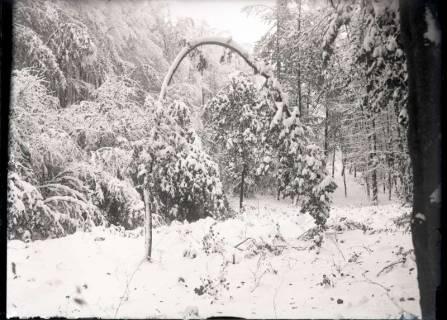 ARH NL Kageler 513, Osterwald im Schnee, ohne Datum