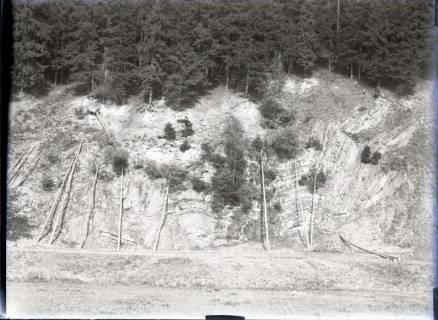 ARH NL Kageler 533, Gefällte Bäume für das Sägewerk, Schierke, 1913