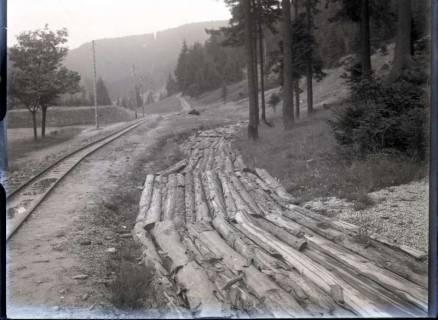 ARH NL Kageler 534, Gefällte Bäume für das Sägewerk, Schierke, 1913