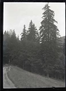 ARH NL Kageler 555, Tannen im Bodetal im Harz, 1913