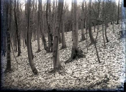 ARH NL Kageler 786, Talbildung durch Erosion, Bäume auf rutschendem Hang, Gehrdener Berg, 1940