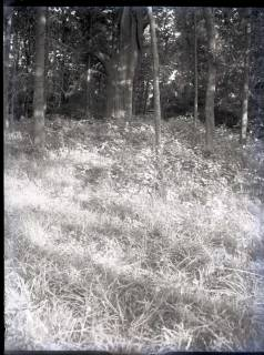 ARH NL Kageler 788, Hügelgrab, Benther Holz, 1940