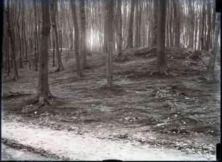 ARH NL Kageler 790, Hügelgrab, Benther-Berg, 1940