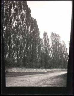 ARH NL Kageler 990, Pappeln, Benthe, ohne Datum