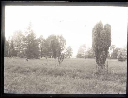 ARH NL Kageler 1172, Parklandschaft, Lutterloh, ohne Datum