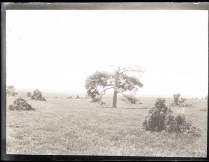 ARH NL Kageler 1173, Kletterkiefer, Lutterloh, ohne Datum