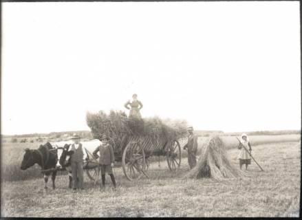 ARH NL Kageler 1186, Bauern bei der Ernte, Bothmer, ohne Datum