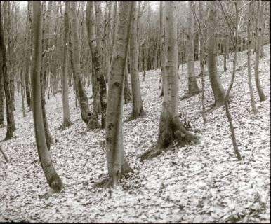 ARH NL Kageler 1294, Talbildung durch Erosion, Bäume auf rutschendem Hang, Gehrdener Berg, 1940
