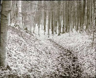ARH NL Kageler 1295, Talbildung durch Erosion, Erosionstal, Gehrdener Berg, 1940