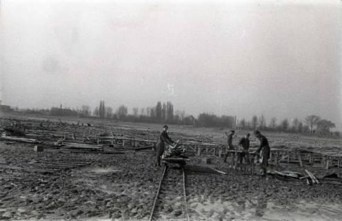 ARH NL Koberg 632, Entfernung von Tarnholz bei der Räumung des Maschsees zwecks Nutzung als dringend benötigtes Bauholz, Hannover, 1945