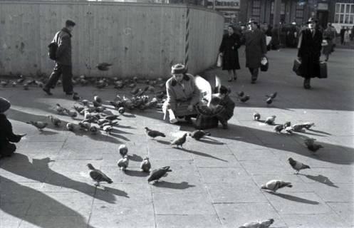 ARH NL Koberg 243, Tauben auf dem Ernst-August-Platz, Hannover, 1958
