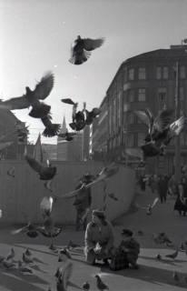 ARH NL Koberg 244, Tauben auf dem Ernst-August-Platz, Hannover, 1958