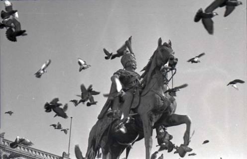 ARH NL Koberg 245, Tauben rund um das Ernst-August-Denkmal, Hannover, 1958