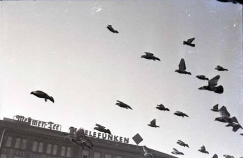 ARH NL Koberg 246, Tauben auf dem Ernst-August-Platz, Hannover, 1958