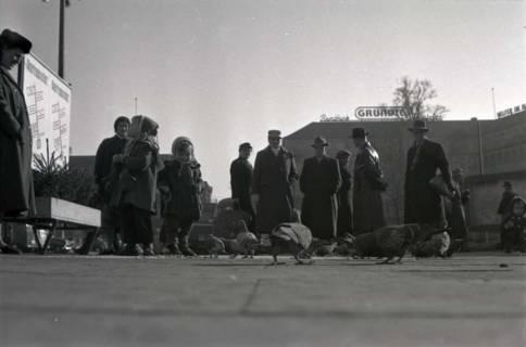 ARH NL Koberg 247, Tauben auf dem Ernst-August-Platz, Hannover, 1958
