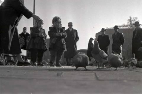 ARH NL Koberg 248, Tauben auf dem Ernst-August-Platz, Hannover, 1958