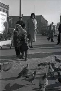 ARH NL Koberg 249, Tauben auf dem Ernst-August-Platz, Hannover, 1958