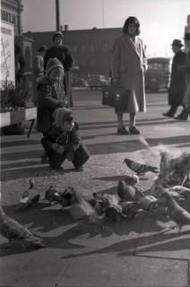 ARH NL Koberg 250, Tauben auf dem Ernst-August-Platz, Hannover, 1958