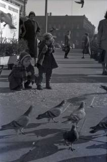 ARH NL Koberg 251, Tauben auf dem Ernst-August-Platz, Hannover, 1958