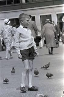 ARH NL Koberg 264, Tauben auf dem Ernst-August-Platz, Hannover, 1962