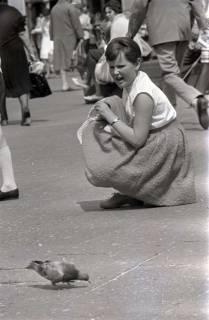 ARH NL Koberg 266, Tauben auf dem Ernst-August-Platz, Hannover, 1962