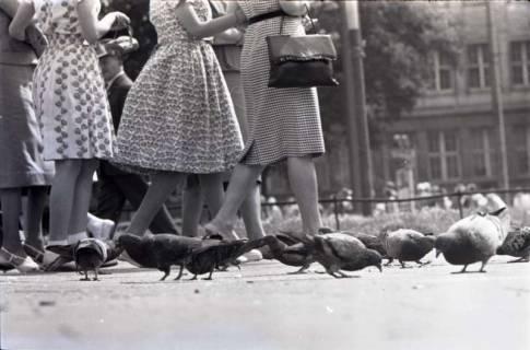 ARH NL Koberg 268, Tauben auf dem Ernst-August-Platz, Hannover, 1962