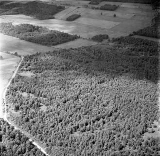 ARH NL Koberg 2693, Helstorfer Moor, Neustadt am Rübenberge, 1976