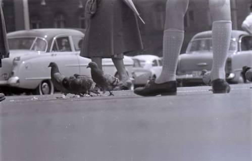 ARH NL Koberg 270, Tauben auf dem Ernst-August-Platz, Hannover, 1962