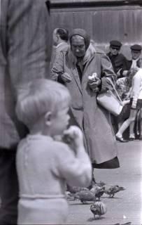 ARH NL Koberg 272, Tauben auf dem Ernst-August-Platz, Hannover, 1962