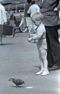 ARH NL Koberg 274, Tauben auf dem Ernst-August-Platz, Hannover, 1962