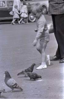 ARH NL Koberg 275, Tauben auf dem Ernst-August-Platz, Hannover, 1962