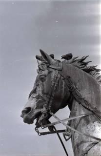 ARH NL Koberg 278, Tauben auf dem Ernst-August-Denkmal, Hannover, 1962