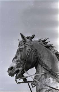 ARH NL Koberg 279, Tauben auf dem Ernst-August-Denkmal, Hannover, 1962