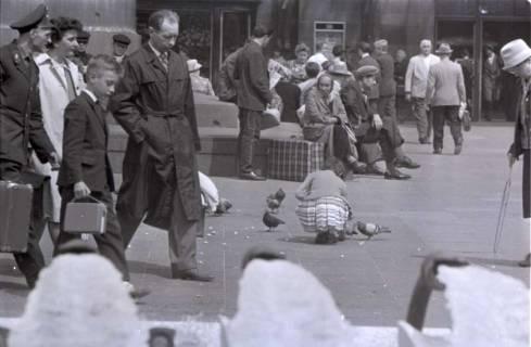 ARH NL Koberg 281, Tauben auf dem Ernst-August-Platz, Hannover, 1962