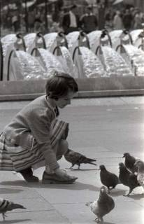 ARH NL Koberg 283, Tauben auf dem Ernst-August-Platz, Hannover, 1962