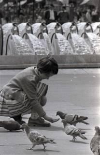 ARH NL Koberg 284, Tauben auf dem Ernst-August-Platz, Hannover, 1962