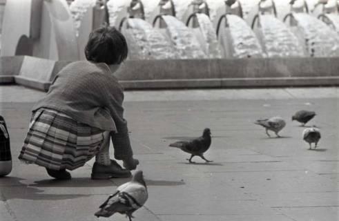 ARH NL Koberg 285, Tauben auf dem Ernst-August-Platz, Hannover, 1962
