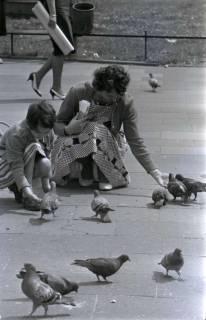 ARH NL Koberg 287, Tauben auf dem Ernst-August-Platz, Hannover, 1962