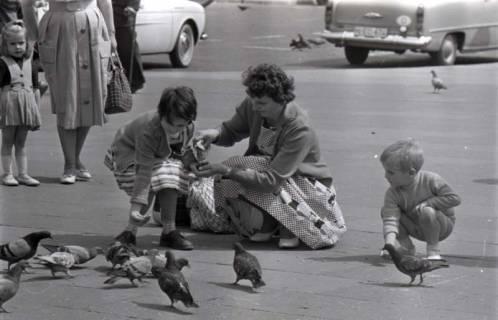 ARH NL Koberg 289, Tauben auf dem Ernst-August-Platz, Hannover, 1962