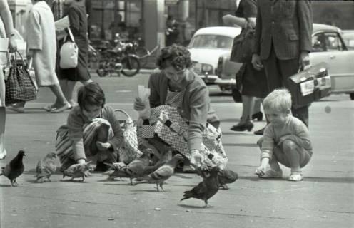 ARH NL Koberg 290, Tauben auf dem Ernst-August-Platz, Hannover, 1962