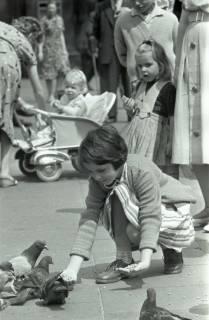 ARH NL Koberg 291, Tauben auf dem Ernst-August-Platz, Hannover, 1962