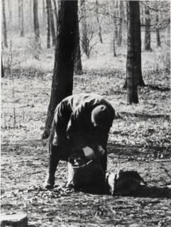 ARH NL Koberg 902, Letzte Holzreste werden in den Wäldern (Eilenriede) im Winter 1945/1946 zusammengesucht, Hannover, 1946