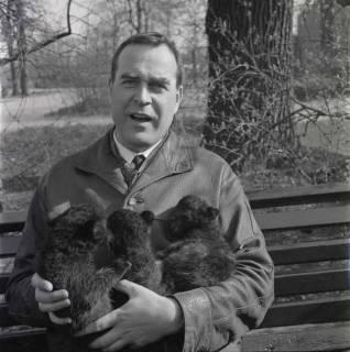 ARH NL Koberg 987, Zoodirektor Lothar Dittrich mit Welpen auf dem Arm im Zoo, Hannover, 1968