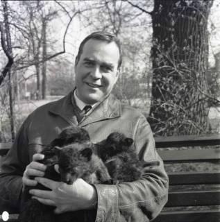 ARH NL Koberg 988, Zoodirektor Lothar Dittrich mit Welpen auf dem Arm im Zoo, Hannover, 1968