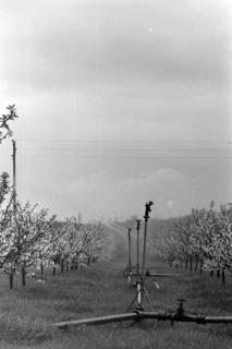 ARH NL Mellin 01-009/0002, Frostschutzberegnung in einer Obstbaumplantage, ohne Datum
