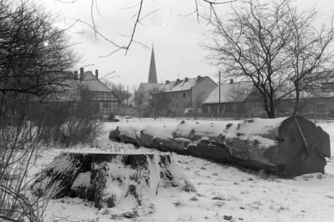ARH NL Mellin 01-016/0016, Amtspark, Großburgwedel, zwischen 1970/1990