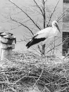 ARH Slg. Bartling 540, Storchennest mit stehendem Storch, um 1975